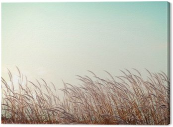 abstract vintage nature background - softness white feather grass with retro blue sky space