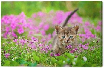 Adorable tabby kitten in flowers Canvas Print