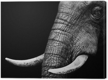 African Elephant Close Up Canvas Print