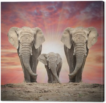 African elephant family on the road. Canvas Print