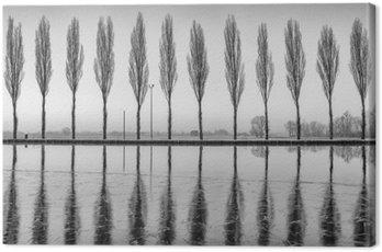 Canvas Print Alberi riflessi sul lago all'alba in bianco e nero