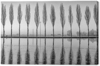 Alberi riflessi sul lago all'alba in bianco e nero