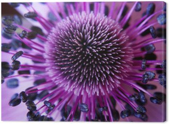 Canvas Print anamone flower