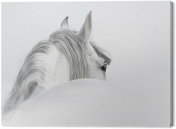 Canvas Print Andalusian horse in a mist