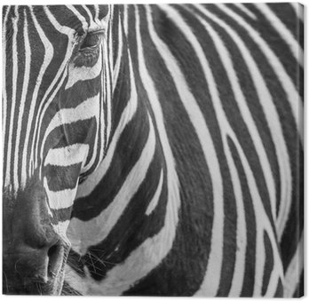 Canvas Print animal zebre portrait
