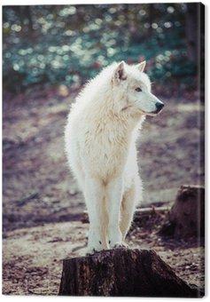Canvas Print Arctic white wolf