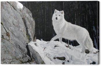 Canvas Print Arctic Wolf Portrait