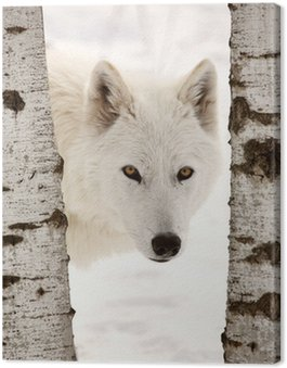Canvas Print Arctic Wolf seen between two trees in winter