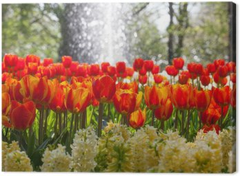 Arrangement of tulips and hyacinth with water fountain Canvas Print