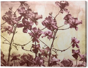 Artistic background with magnolia Canvas Print