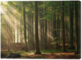 Canvas Print autumn forest trees. nature green wood sunlight backgrounds.
