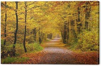 Canvas Print Autumn forest