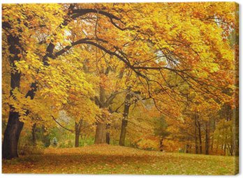 Autumn / Gold Trees in a park Canvas Print