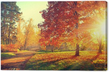 Autumn scene. Fall. Trees and leaves in sun light Canvas Print