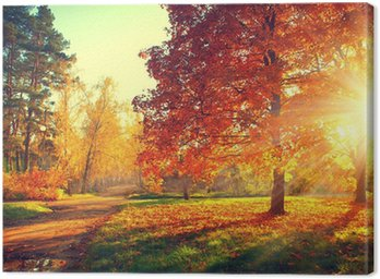 Canvas Print Autumn scene. Fall. Trees and leaves in sun light