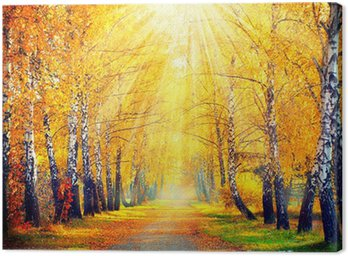 Autumnal Park. Autumn Trees and Leaves in sun rays Canvas Print