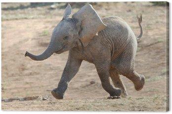 Baby Elephant Running Canvas Print
