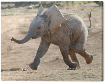 Canvas Print Baby Elephant Running
