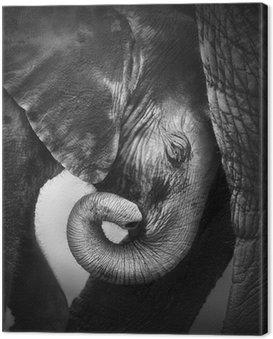 Baby elephant seeking comfort