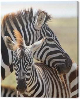 Canvas Print Baby zebra with mother