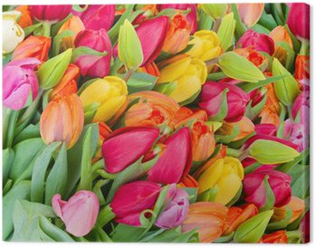 background of spring tulips