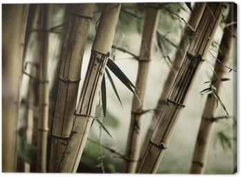Canvas Print Bamboo forest background