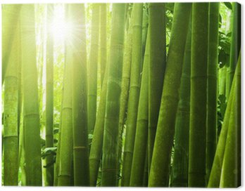 Canvas Print Bamboo forest.