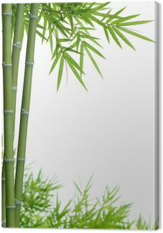 Canvas Print bamboo with leaves