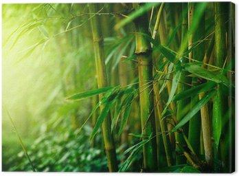 Canvas Print Bamboo