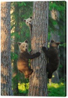 Canvas Print Bear cubs on a tree