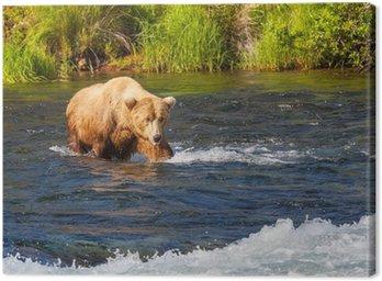Canvas Print Bear on Alaska