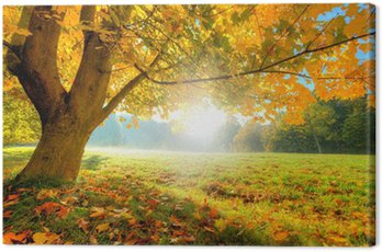 Canvas Print Beautiful autumn tree with fallen dry leaves