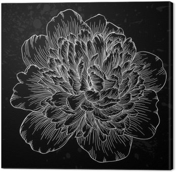 Canvas Print beautiful black and white peony flower isolated on background. Hand-drawn contour lines and strokes.