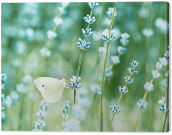 Beautiful detail of a lavender field Canvas Print
