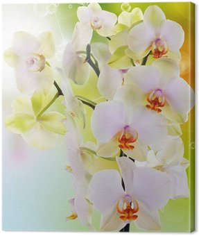 Canvas Print Beautiful flowers Japanese Orchid.Beauty.Flora