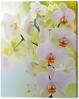 Beautiful flowers Japanese Orchid.Beauty.Flora Canvas Print