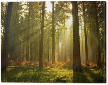 Canvas Print Beautiful Forest