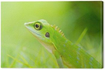 Beautiful green gecko lizard Canvas Print