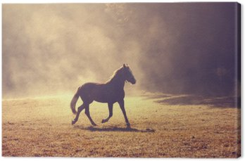 Canvas Print Beautiful morning sunlight foggy meadow with domestic brown horse.