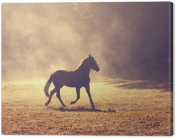 Beautiful morning sunlight foggy meadow with domestic brown horse.