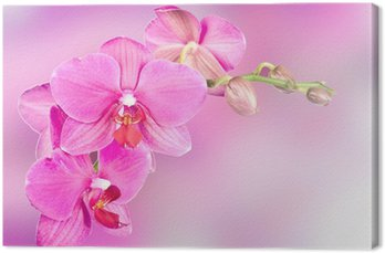 Canvas Print beautiful pink orchid flower