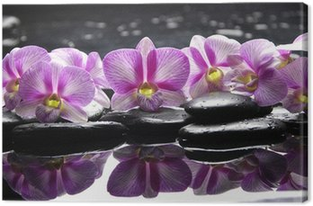 Canvas Print Beautiful pink orchid with black stones reflection