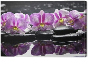 Beautiful pink orchid with black stones reflection