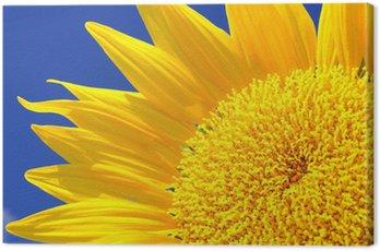 Canvas Print Beautiful sunflower against blue sky