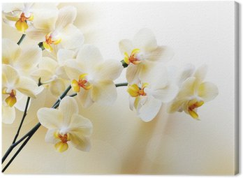 Beautiful white orchid Canvas Print