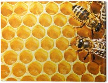 Canvas Print bees on honeycells