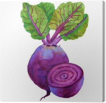 beets with leaves. isolated on white background. watercolor illu