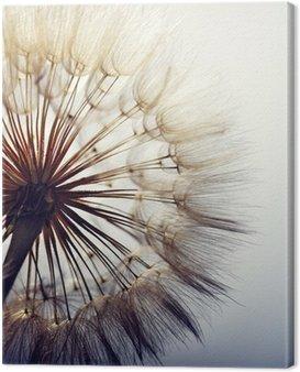 Canvas Print big dandelion on a blue background