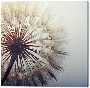 big dandelion on a blue background Canvas Print