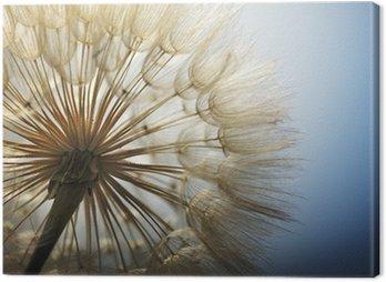 big dandelion on a blue background Canvas Print